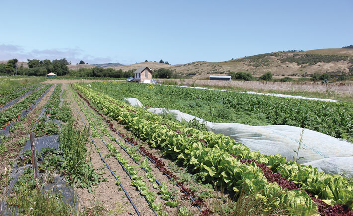 Report outlines economic barriers to transitioning to organic